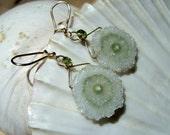 Amethyst Stalactite, solar quartz, 14k gold filled  earrings
