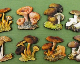 Mushroom Wood Cuts - Collection of 8 Different Mushooms Craft Pieces