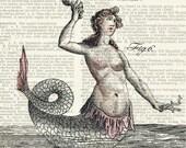 mermaid, 18oo's mythological creature IV print