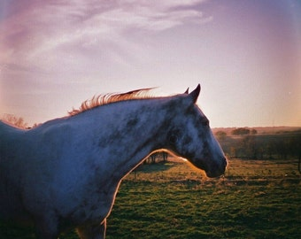 Sunny the Horse Lomography Photograph