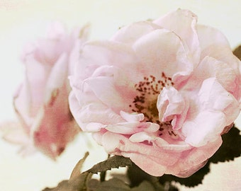 Pink Rose Art, Rose Print, Shabby Chic Home, Rose Photography, Bedroom Decor, Fine Art Print