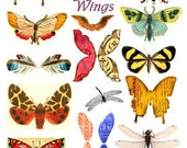 Digital Collage Sheet Download Butterfly Moth Wings Images No. 151