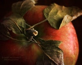 red apple kitchen decor fine art photography print leaves food photo