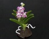 Dollhouse Miniature Handmade Clay Rhynchostylis Gigantea Orchid Flower Flora
