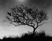 crow raven art, bird art, tree art, moonlight, print, painting, dark sky, wildlife, animal, feathers, tree hill, night sky, starlight