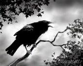 Crow art, raven art, crow painting, raven painting, wildlife art, black crow, black raven, crow caw, raven song, bird in tree, bird singing