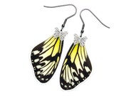 Real Butterfly Wing Earrings (Ideopsis Gaura Forewing - E196)