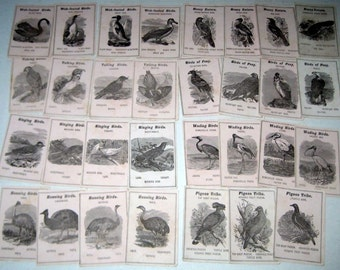 Antique Bird Card Game - Beautifully Detailed Drawings