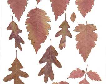 clip art mixed autumn leaves