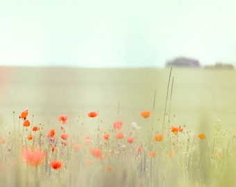 Poppies photograph. Poppy fields. Pastel. Nature photograph. Fine art photography print. 8x8 (20x 20cm)