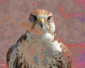 Falcon Art, Native American Totem Animal, Birds of Prey, Wall Hanging, Southwestern Home Decor, Purple Lilac Lavender, Giclee Print