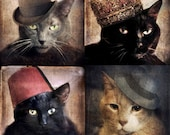 Cat Art Animal Photography Print Sets Cats wearing Hats Pet Portrait 40% OFF - Four 5x5 Prints - Cats in the Hats Collection