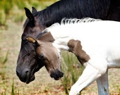 Mother and Child Horse Photography, Baby Animal Photo, Wild Horses, Cute Paint Foal, White, Brown, Green, Nature Decor, Autumn Wall Art