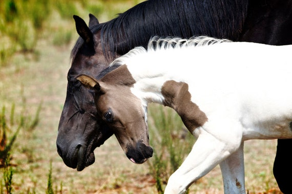 Items Similar To Mother And Child Horse Photography Baby