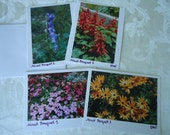 Floral Photo Note Cards, Flower Photo Note Cards, Notecards, Photography Notecards, Set 4 - CLEARANCE