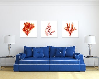 Canvas Wall Art Set, Red Seaweed Botanical Prints, Coastal Decor, Beach House Artwork