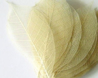 One Dozen Medium Ivory Skeleton Leaves Great for Corsages, Hair Clips, Paper Crafts