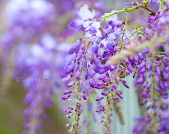 Wisteria - Includes FREE SHIPPING!