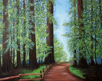 12x16 Redwood Forest Print - Landscape Giclee