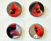 Magnets Set of 4 Cardinal Birds - 1.5 inch  Buy 3 Sets Get 1 Set Free  319M