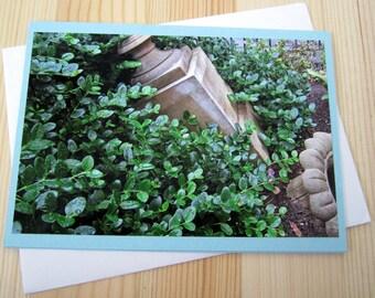 Garden Ruins Vivid Photography