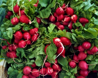 Farmers Market Radish, Red Radish Photography, Kitchen Pictures, Kitchen art Photos, Gift of Art, Fine Art Photography