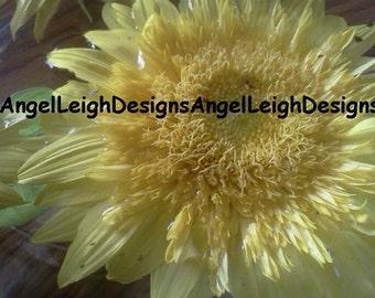 Yellow Sunflower plant portrait digital download