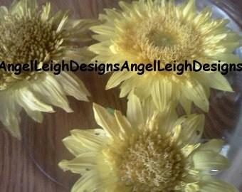 Yellow Sunflowers digital download plant portrait
