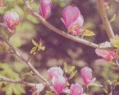 Flower Photography, Magnolia Photograph, Romantic, Nature, Pastels, Pink, Green, Dusty Rose Wall Decor - Spring Afternoon