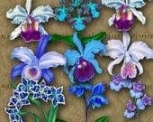 BLUE ORCHIDS - assorted sizes Digital Printables for Paper Crafts or Transfer Art for tote bags tees pillows...jpg png