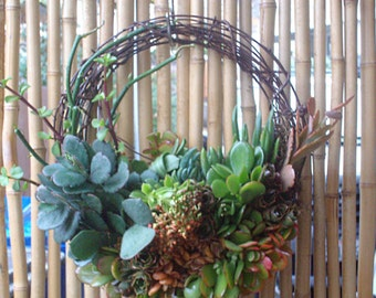 Garland 14 inch willow branches living succulent wreath