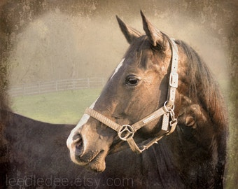 Chestnut - Textured Vintage Style Original Photograph - Brown Horse Farm Barn Rustic Distressed Home Decor Wall Art