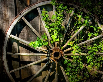 Sunlit Old Wagon Wheel and Spokes with Green Leaf Vines in Ontario Canada A Fine Art Nature Still Life Photograph