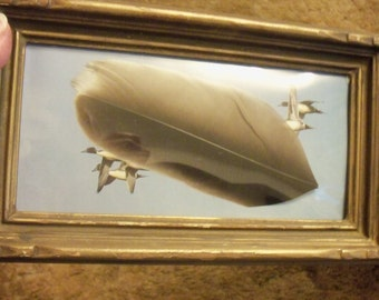 Large feather, framed