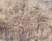 Rustic country photography Landscape photography Beige dry flowers brown Wall Decor Home decor Fine Art Photography Print