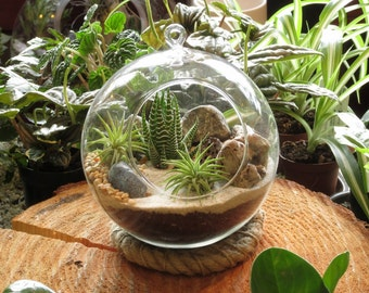 Modern Succulent and Air Plant Sphere Terrarium Kit by Midnight Blossom - Hanging or Tabletop - Awesome DIY Project