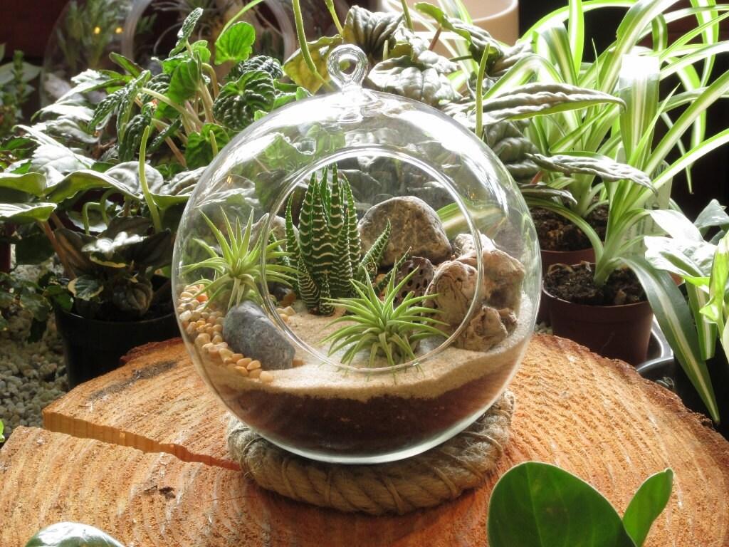 Succulent Planters For Sale Modern Succulent And Air Plant Sphere Terrarium Kit By