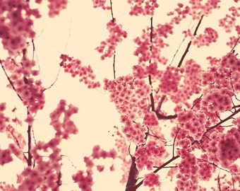Nature Photography: A Fine Romance Fine Art Photography Nature Wall Art Pink flowers Trees Spring Still life Flower photography Bedroom art