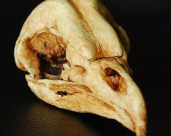 Barn Owl Bird Skull Resin Replica- Tyto alba- antiqued
