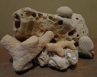 Cousteau's Mask View, SEA Floor Vignette, 6 Piece Corals, Fossil Shell Rock, Giant Sculpted Ocean Rock, Nooks & Crannies, Embedded Shells