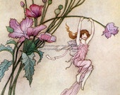 Flower Fairy Card - Fairies Play on Pink Flowers - Warwick Goble