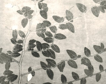 monoprint, ivy, botanical print, black & white
