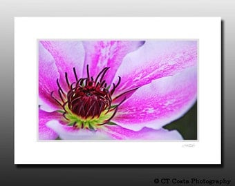 Pink Flower Art Print, Signed Matted Print fits 5x7 inch frame, cubicle decor