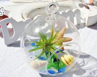 Fun in the Sun - Sea Glass - Glass Globe Hanging Terrarium Kit with Tillandsia  Air Plant - Beach - Home Decor - Gift