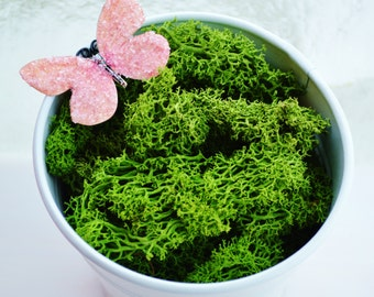 Reindeer Lichen Moss ~ Preserved and Colored ~ Hunter Green ~ Now available in 2 different sizes