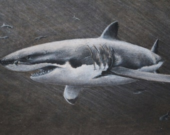 8x10 Charcoal Drawing Great White Shark with Fish Print from the Original