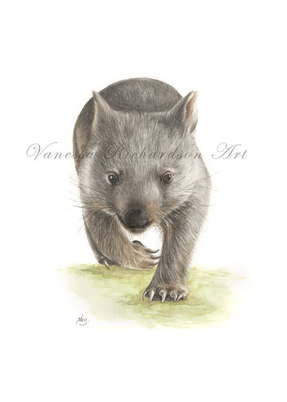 Watercolour Fine Art Print - 'Wombat on the Run' - Original painting by Wildlife artist Vanessa Richardson - Available in A3 & A4 size.