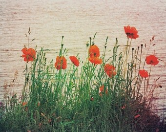 Poppies By The Lake, Nature Photograph, Fine Art Print, Red Orange, Flower, Green Grasses, Lakeside, Poppy Wall Art, Floral Home Decor