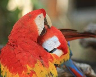 Tropical Photographs Macaws