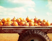 "Autumn Photography, pumpkins fall nature photo print orange wall art blue farm country decor rural - 11x14, 8x12, 8x10 Photograph, ""Harvest"" - CarolynCochrane"